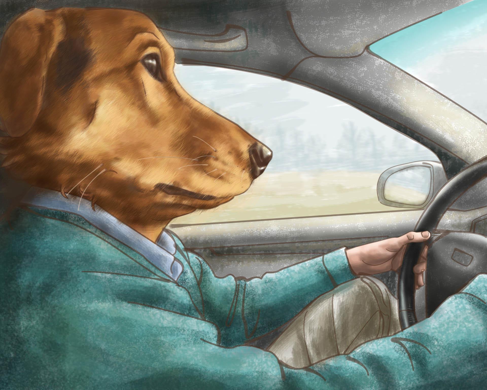 Dog Driving Illustration • Personal Work