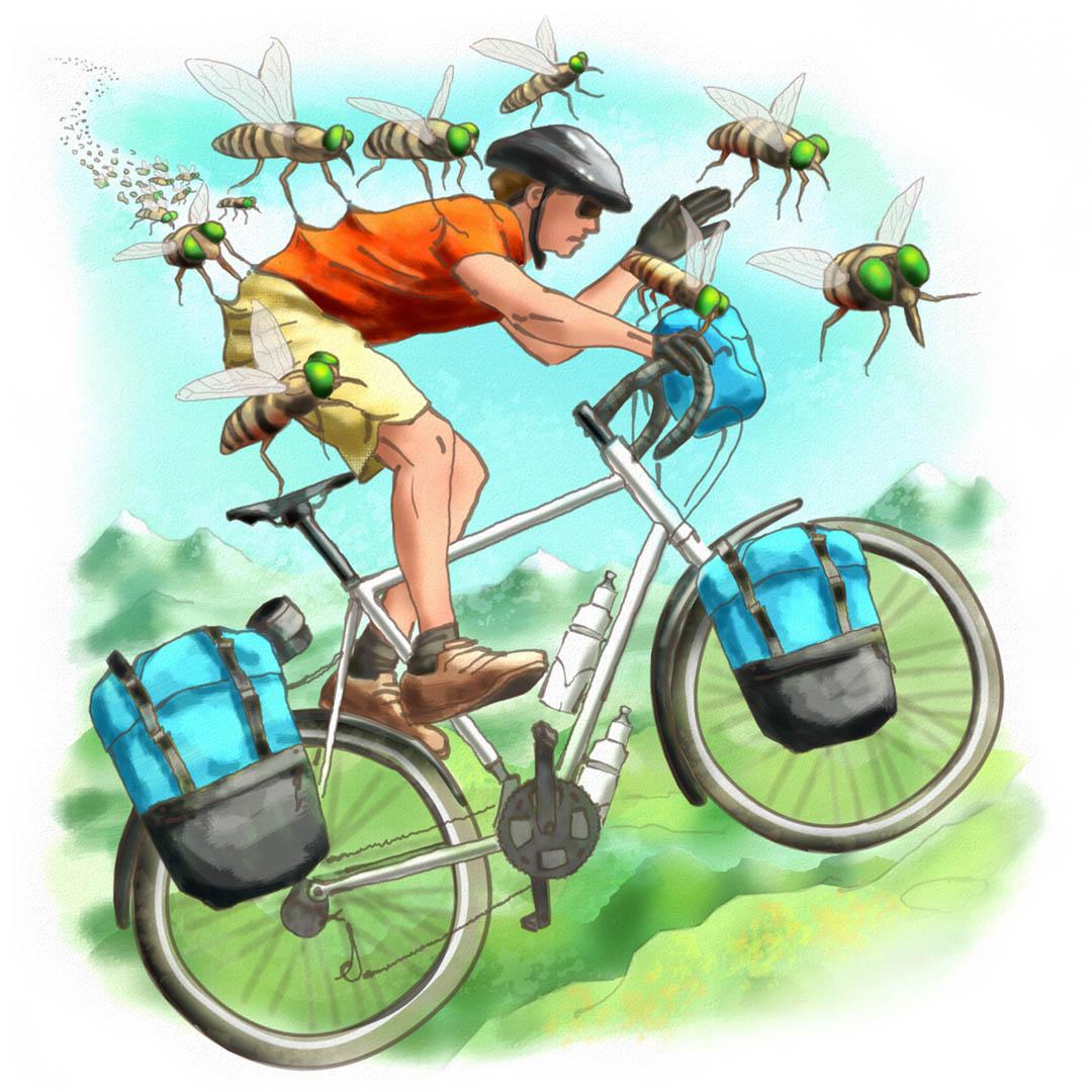 The Horse Fly Shuffle on Mt Kosciuszko Illustration • Adventure Cyclist Magazine